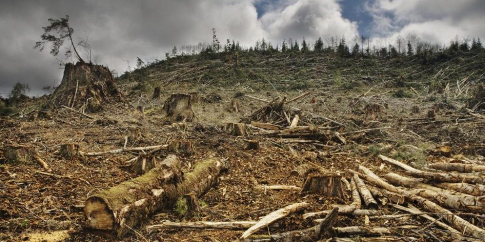 Image de déforestation